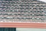 На покривот се развива мувла